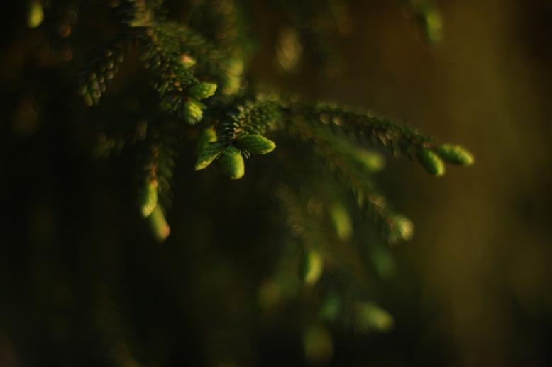 green_treebranch_001
